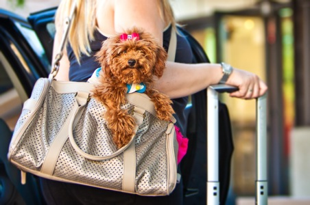 Tips for Traveling with Your Pets