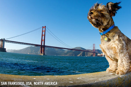 National Pet Day: Most Inspiring Four-Legged Travelers