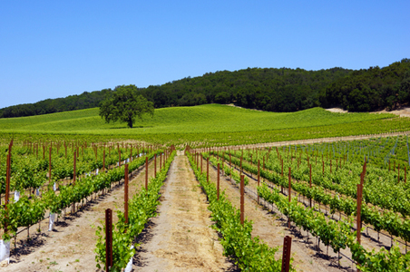 11 Reasons to Go to Paso Robles Now