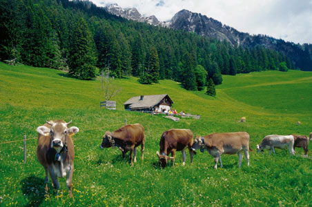 6 Reasons to Go to Switzerland this Summer