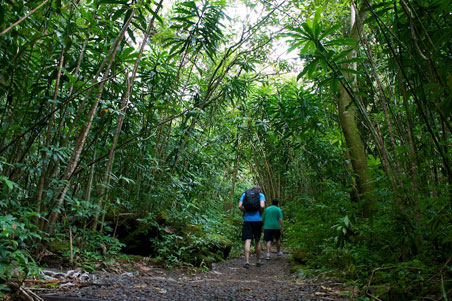 7--Manoa-Valley-Hike.jpg