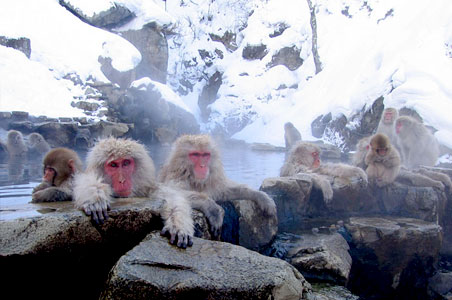 7-Snow-Monkeys.jpg