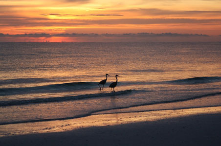 7-Tigertail-Beach-Park-Marco-Island.jpg