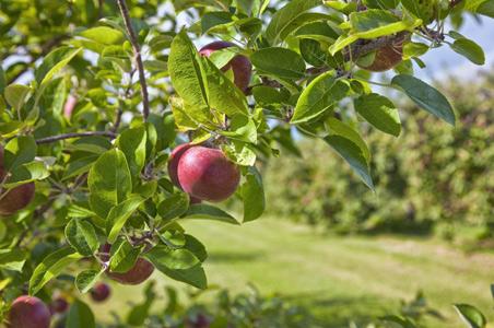 8-apple-orchard.jpg