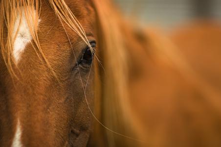 8-horse-reiki.jpg