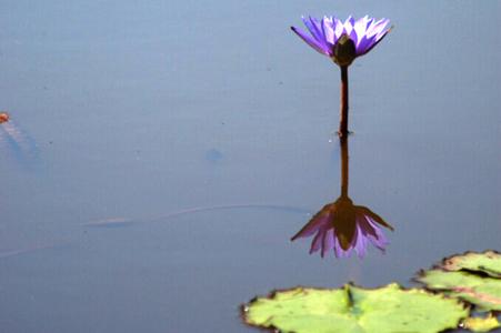 8kenilworth-aquatic-garden.jpg