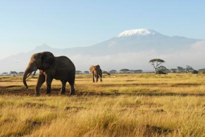 African-Safari-Elephants-Kilimanjaro.jpg