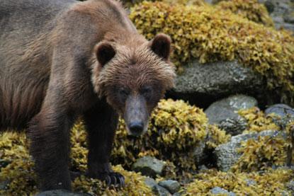 Alaska-bear-rocks.jpg