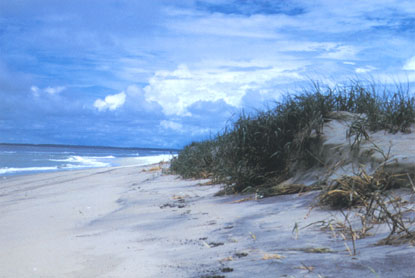 Assateague-National-Seashore-dunes.jpg