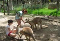 Australia-kangaroos-family-trips.jpg