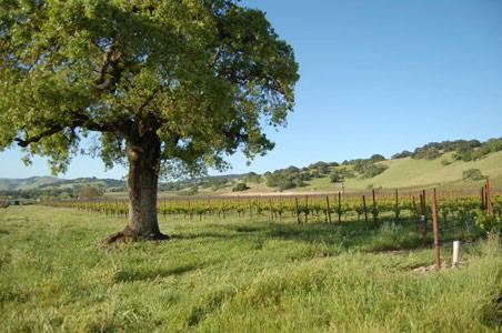 Auteur-Wines-Sonoma.jpg