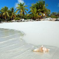 Beach-Shell-200.jpg