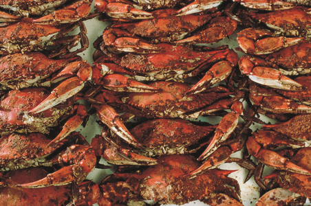 Blue-crabs.jpg