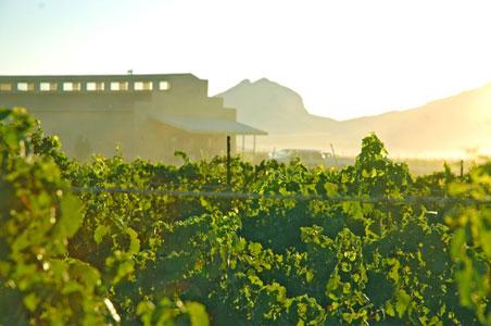 Callaghan-Vineyards.jpg