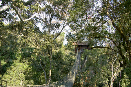Canopy-Tree-House.jpg