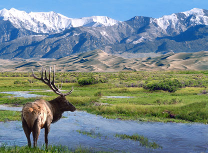 Colorado-Great-Sand-Dunes-elk.jpg