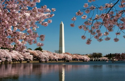 DC-Cherry-Blossoms.jpg
