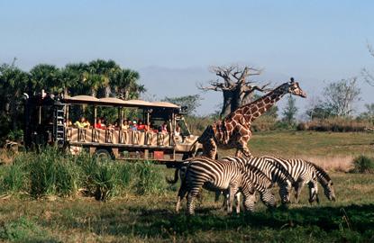 Disney-Kilimanjaro-Safaris.jpg
