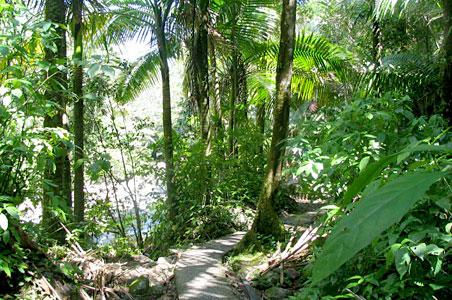 El-Yunque-Rainforest.jpg