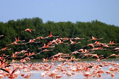 Flamingo%20Flock.jpg