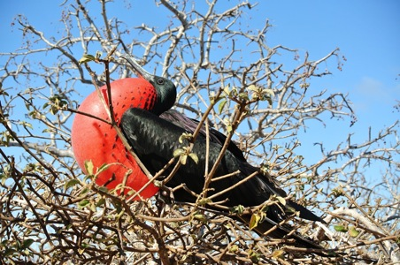 Just Back From: Cruising the Galapagos Islands