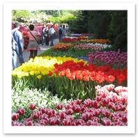 Holland_tulips_flickr_Tom_CaswellFF.jpg