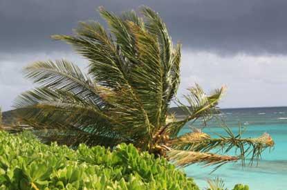 Hurricane-palm-tree.jpg