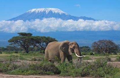 Kenya-Mt-Kilamanjaro-elephant.jpg