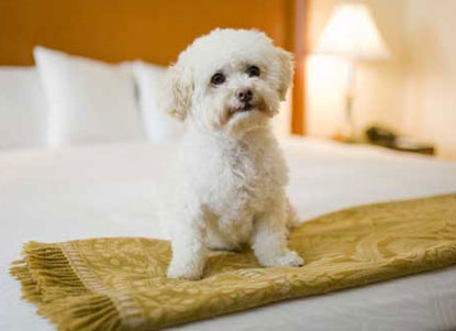 Kimpton-white-dog-on-bed.jpg