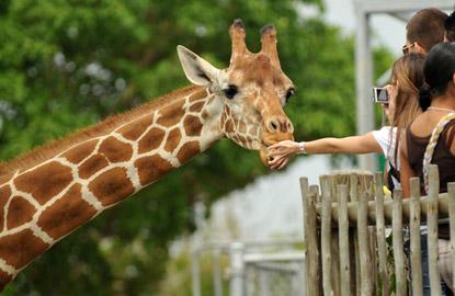 Living-Social-Visa-zoo.jpg