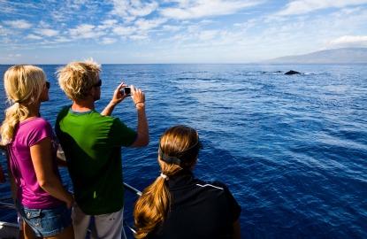 Maui-whale-watch.jpg