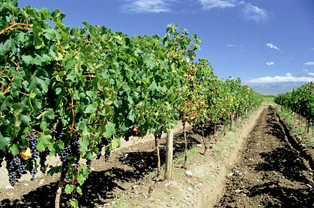 Mendoza-Vineyards.jpg