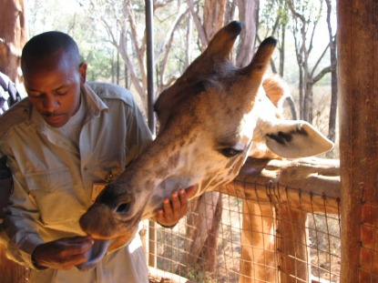 Nairobi-Giraffe.jpg