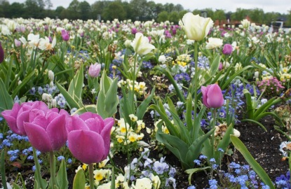 Netherlands-Floriade-Flowers_resize.jpg
