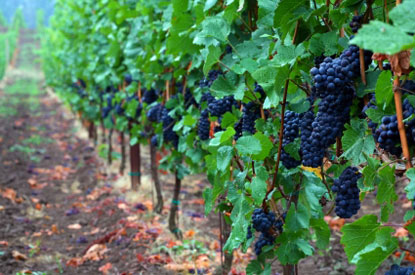 Oregon-Wine-Country.jpg