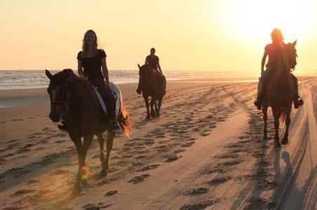Outer-Banks-Horses2.jpg