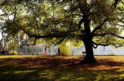 Paris-Picnic-Bois-de-Boulogne.jpg