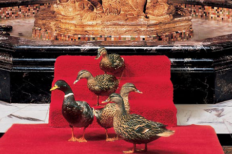Peabody_Ducks.jpg