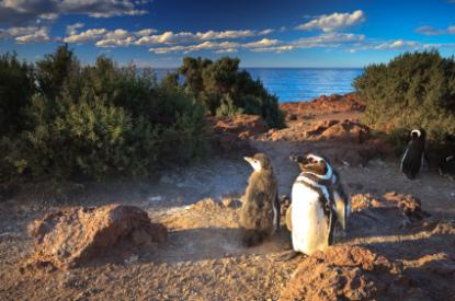 Punta-Tombo-penguins.jpg