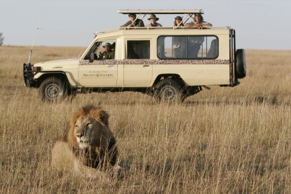 Safari-Micato-vehicle-lion.jpg