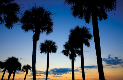 South-Carolina-Edisto-State-Park-palms.jpg