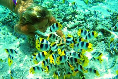 Tahiti-Snorkeler-Butterfly-Fish.jpg