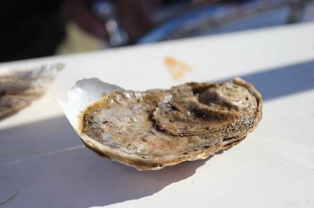 VA-Eastern-Shore-Oyster_sized.jpg