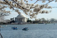 Washington-DC-Jefferson-Memorial-Paddle-Boats.jpg
