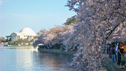 Washington-DC-cherry-blossoms-Jefferson-monument.jpg