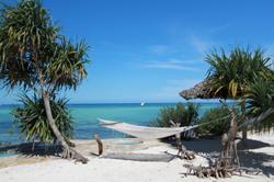 Zanzibar-hammock-beach-palm-trees.jpg