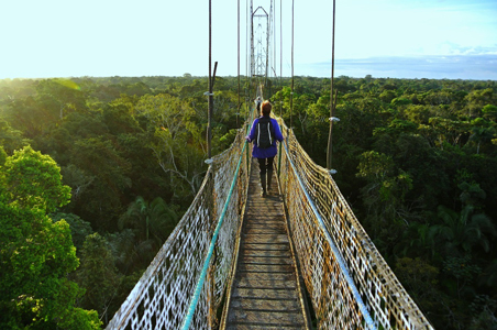 amazon-canopy-walk.jpg