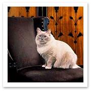 032106_cat.jpg