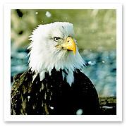 040706_eaglefinal.jpg