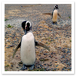 0807_PenguinSTOCKF.jpg